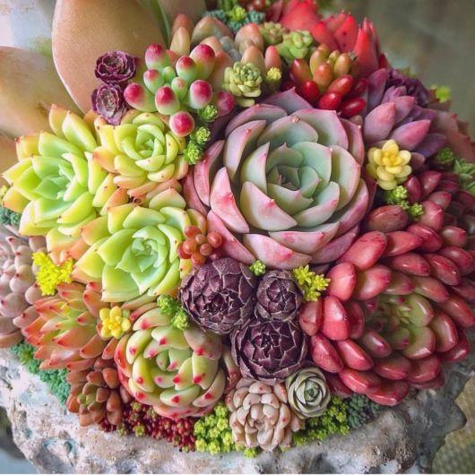 vaso com suculentas coloridas