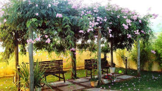 trepadeira para pergolado jasmin branco
