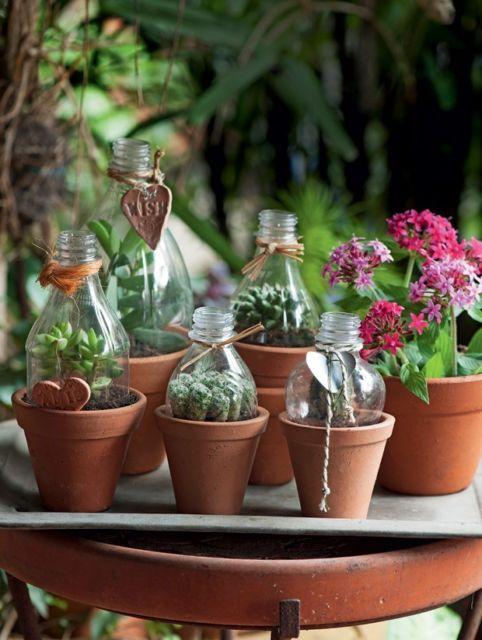 Vasos para suculentas de garrafa PET
