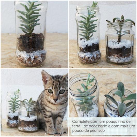 Vasos para suculentas de vidros