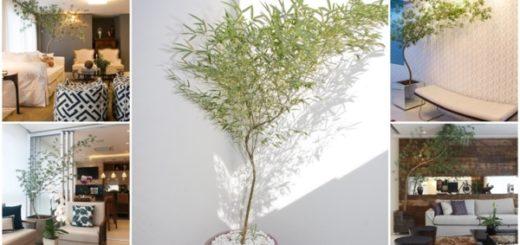 cuidados com bambu mossô