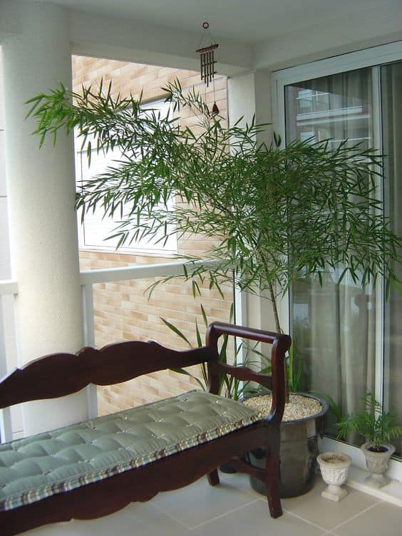 vaso com bambu natural