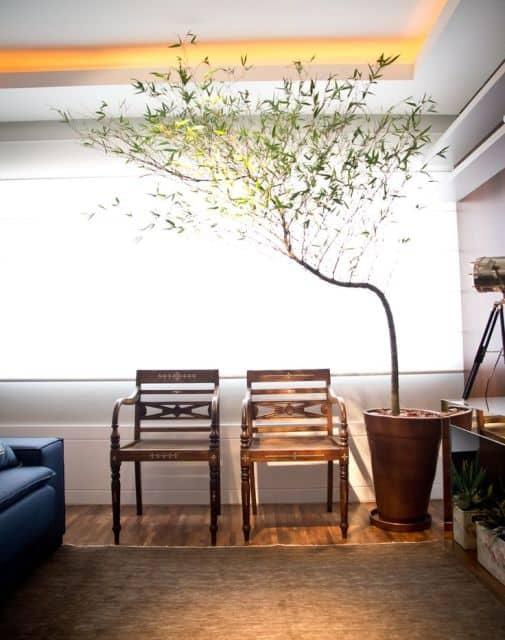 sala decorada com planta natural