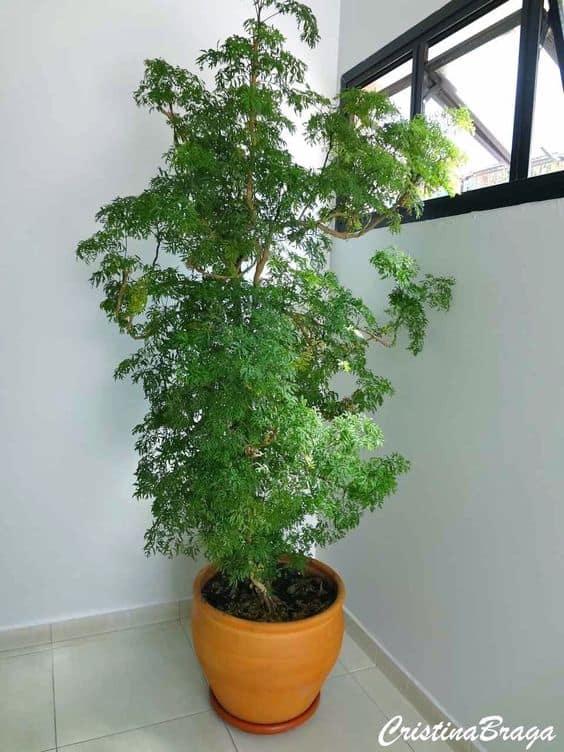 vaso de cerâmica com árvore