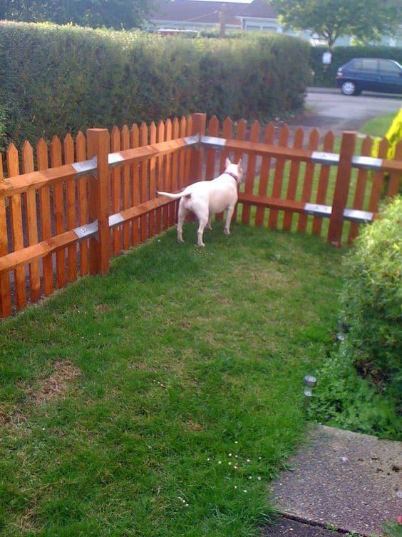 cerca para cachorro