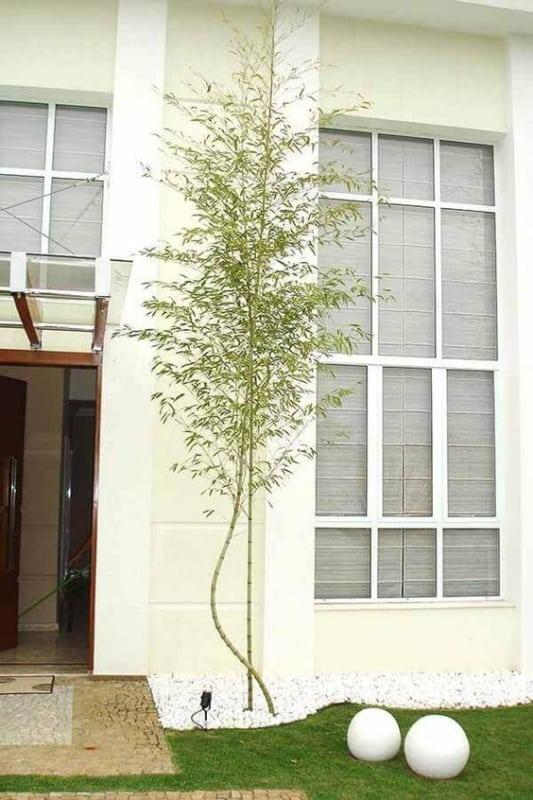 fachada com bambu mossô