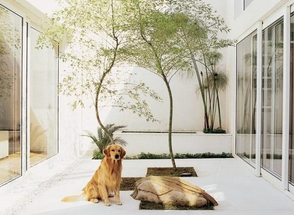 jardim de inverno com bambu mossô