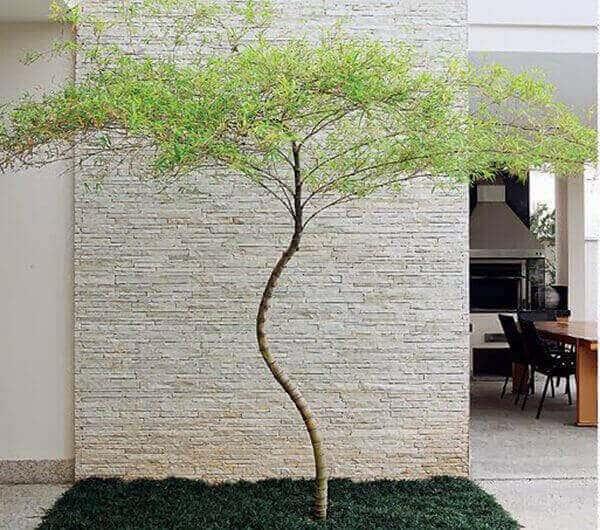 jardim externo com bambu