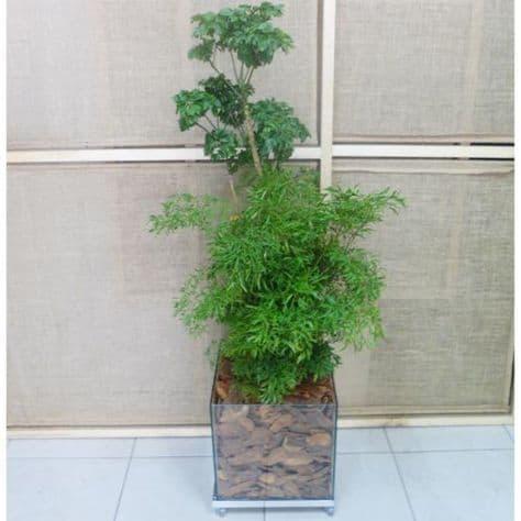planta em vaso de vidro