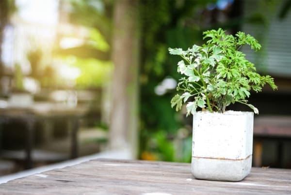 vaso de cimento com planta