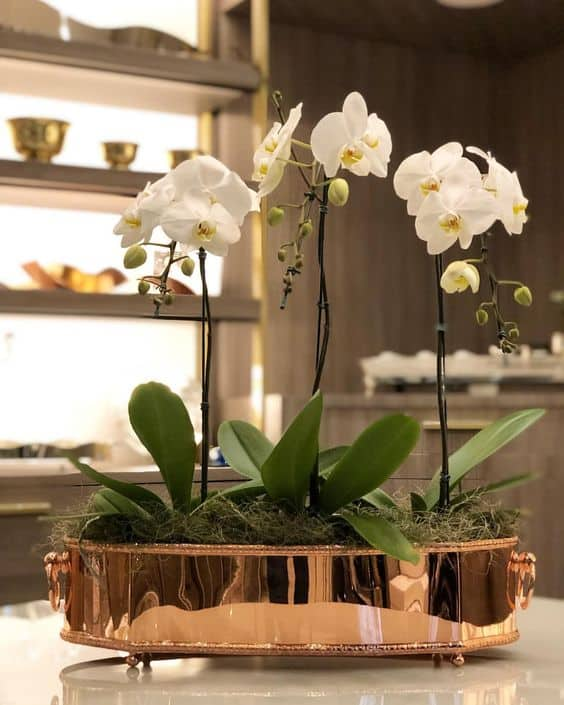 orquídeas brancas