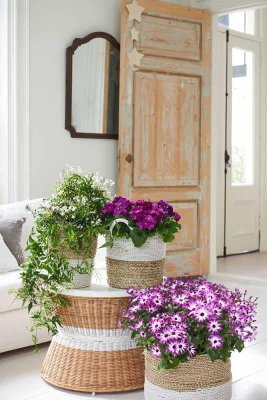Sala com flores do campo roxas