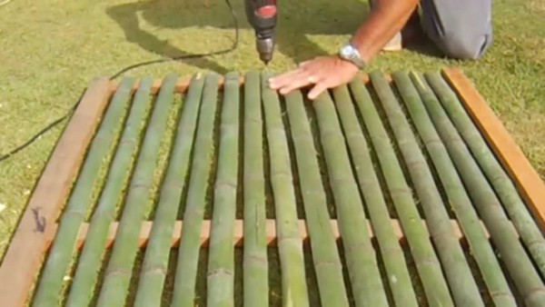 cerca de bambu gigante cortado