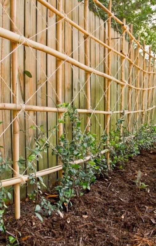 cerca de bambu para horta