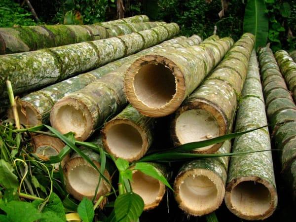 cerca de bambu guadua