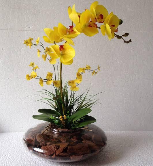 como cuidar de orquídea amarela
