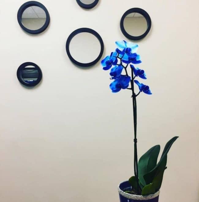 ideias de orquídea azul