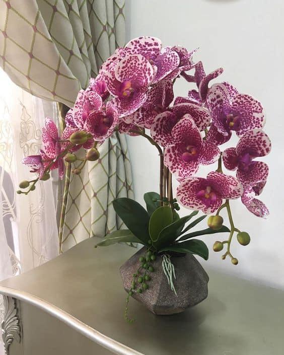 ideias de orquídeas rosas