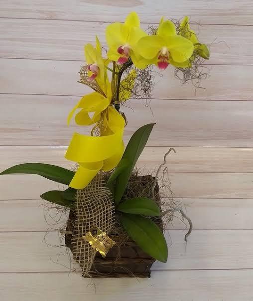 modelo de orquídea amarela
