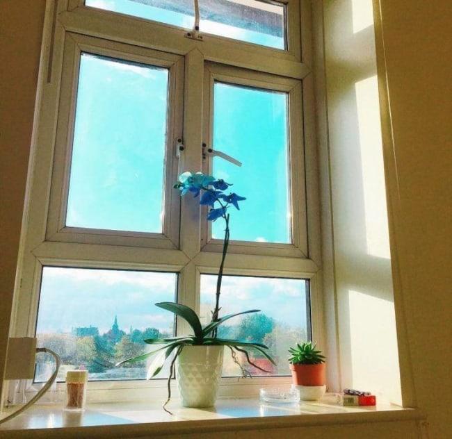 orquídea azul tipos