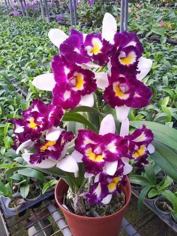 orquídeas roxas e violetas