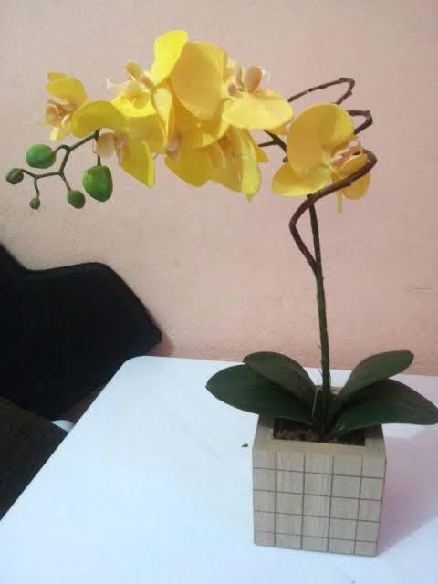 tipo de orquídea amarela