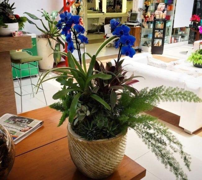 tipos de orquídea azul
