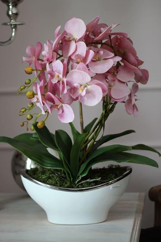 tipos de orquídea rosa