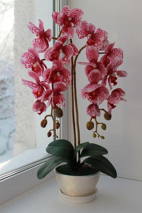 vaso com orquídeas rosas