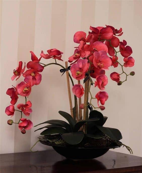 vaso de orquídeas rosas