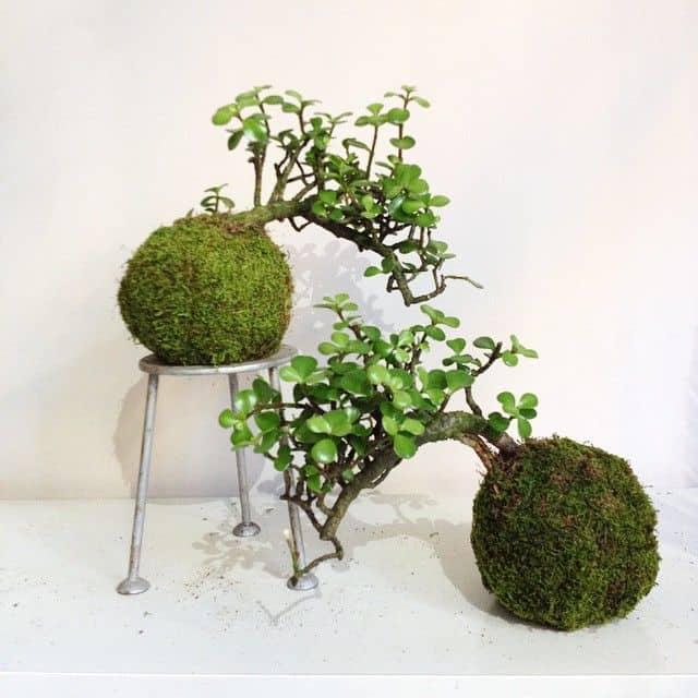 Duas kokedamas de bonsai