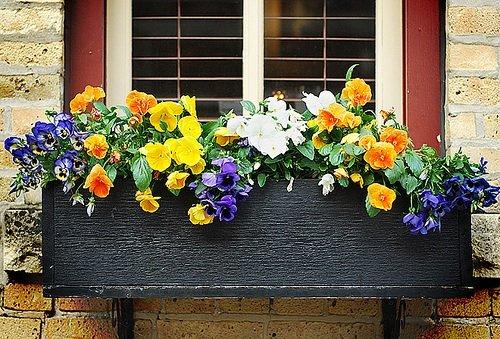 Floreira preta de madeira na janela