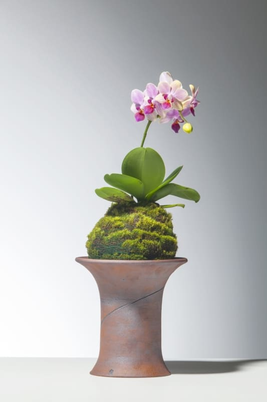Kokedama de orquídea para decorar