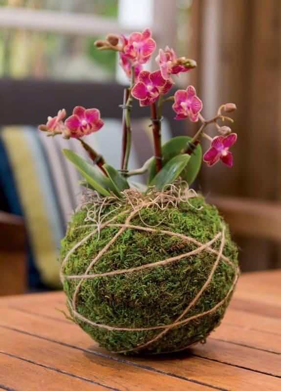 Kokedama de orquídea pequena