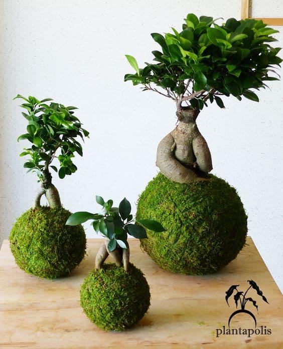 Kokedamas lindas de bonsai