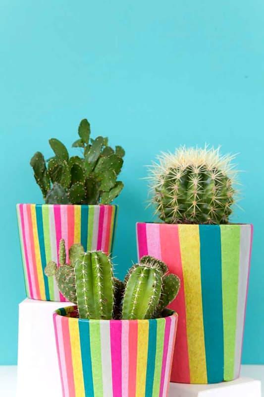 Mini cactos em vasos coloridos