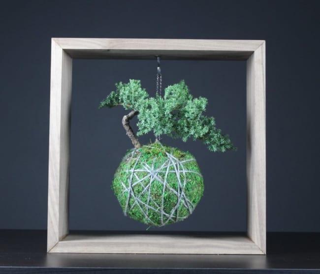 Modelo de Kokedama de bonsai
