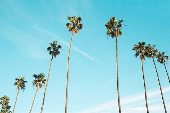 Palmeira Imperial ideias