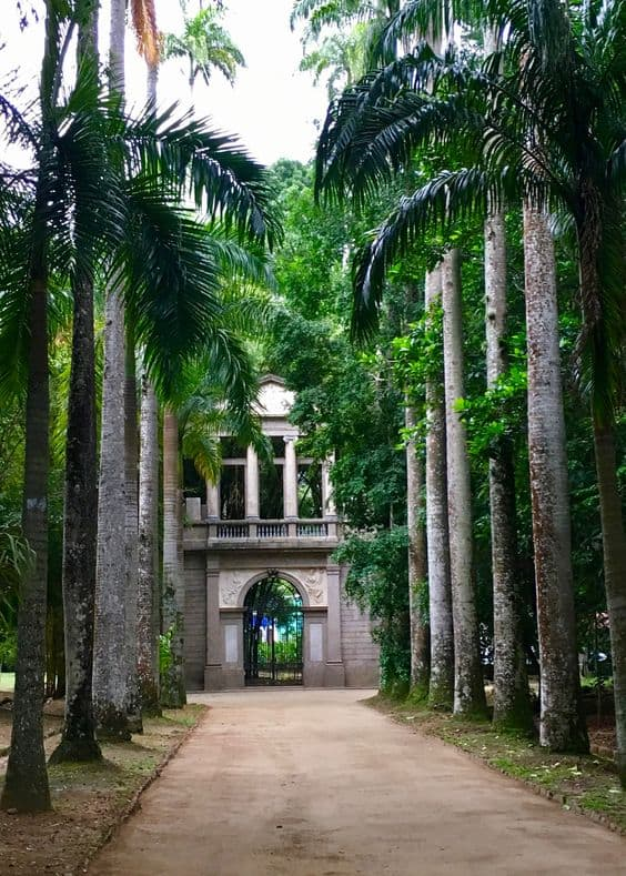 Palmeira imperial cuidados
