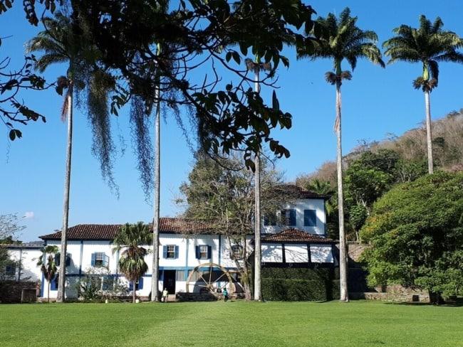 Palmeira imperial em chacara