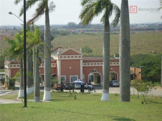 Palmeira imperial em fazendas antigas