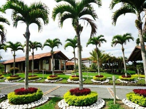 Palmeira imperial em jardim