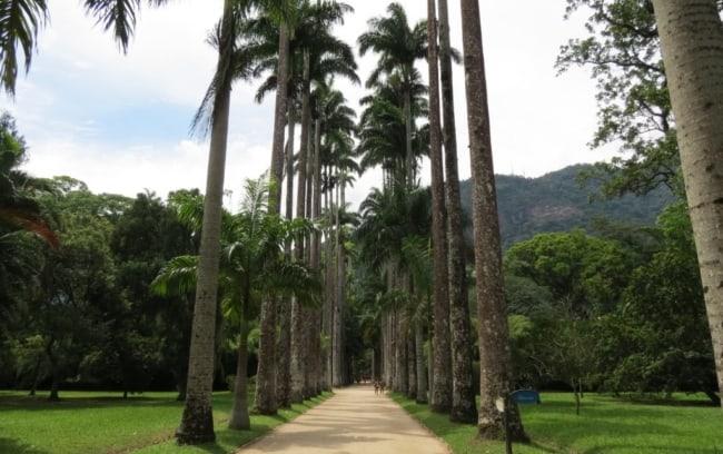 Palmeira imperial em parque