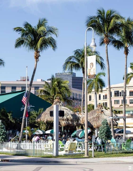 Palmeira imperial em praia