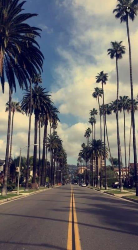 Palmeira imperial em rodovias