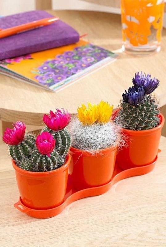 Trio de vasinhos com mini cactos com flores