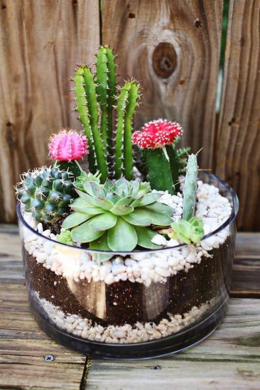 Vaso com suculentas e mini cactos com flores