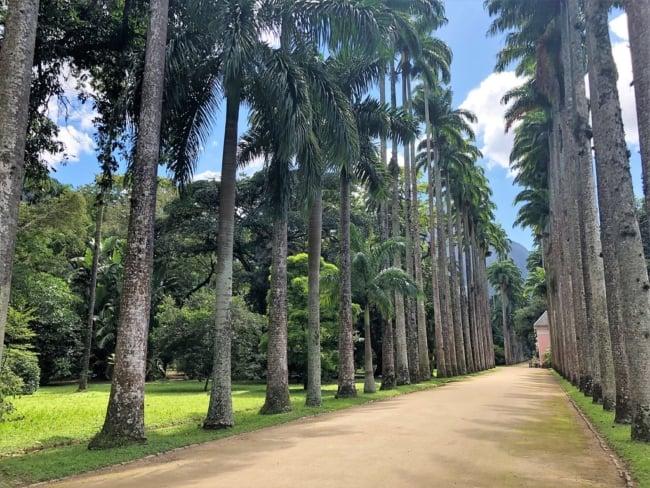 caminhos com Palmeira imperial