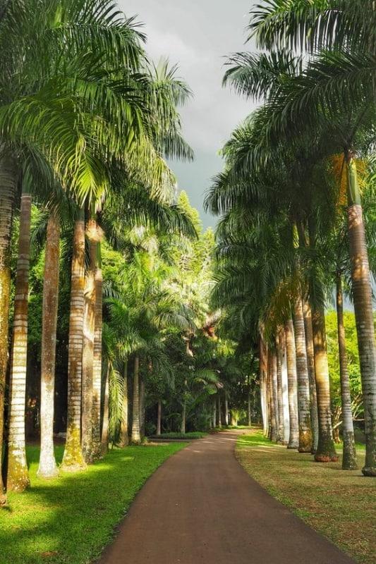 estrada com Palmeira imperial