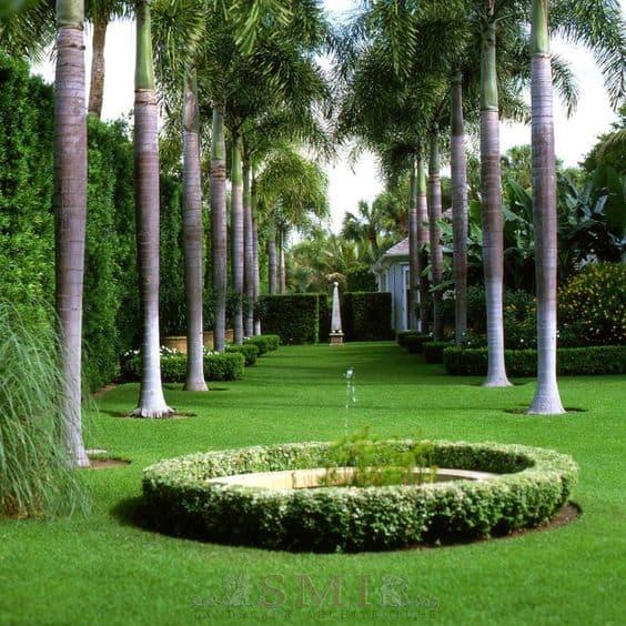 fachada com Palmeira imperial